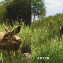 penticton-photo-restoration-2